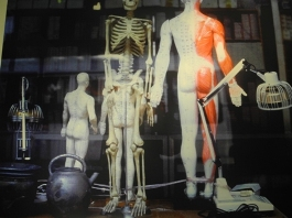 Trattamento della lombalgia e omotossicologia