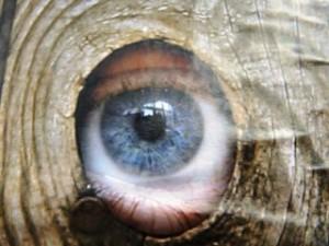 Borse soto gli occhi e omotossicologia